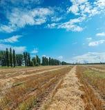 Verzamelde oogst onder bewolkte hemel Stock Afbeelding
