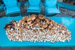 Verzamelde paddestoelenboleet in stapel Stock Foto's