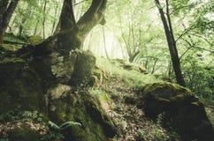 Verzauberter grüner Wald mit altem Baum Stockfotografie