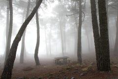 Verzauberter nebeliger grauer Wald Lizenzfreie Stockbilder