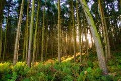 Verzauberter Wald stockfoto