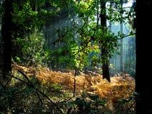 Verzauberter Wald Lizenzfreies Stockbild