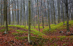 Verzauberter Wald Stockbilder
