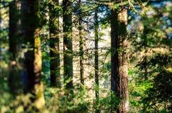 Verzauberter Wald Lizenzfreie Stockfotografie