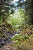 Verzauberter Wald in Alaska stockfotos