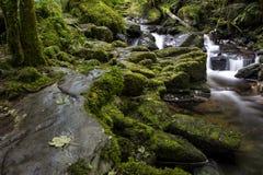Verzauberter Wald und Nebenfluss nahe Torc-Wasserfall, Nationalpark Killarneys, Grafschaft Kerry, Irland Stockfotos