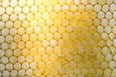Verzerrte Bienenwaben, Hälfte gefüllt mit Honig Lizenzfreie Stockfotos