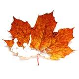 Verzierte Blätter stockfoto