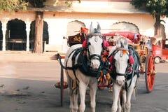 Verzierte Paare Ponys bei Rajasthan, Indien stockfoto
