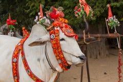 Verzierter Büffel Bagan, Myanmar Abschluss oben Lizenzfreie Stockfotos