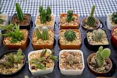 Verzierter Kaktus Stockfoto