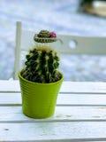 Verzierter Kaktus stockbild