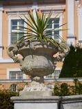 Verzierter konkreter Vase mit Zierpflanze Stockfotos