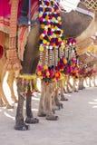 Verziertes Kamel am Wüsten-Festival in Jaisalmer, Indien Kamel ` s Füße schließen oben Lizenzfreie Stockfotos