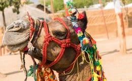 Verziertes Rajasthani-Kamel stockfotografie