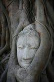 Verzierung: ausführlicher Sandstein Buddha-Kopf im Baum Lizenzfreie Stockbilder