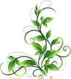 Verzierung mit Blättern stock abbildung