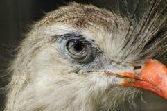 Verzoening op pauw` s oog royalty-vrije stock fotografie