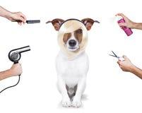 Verzorgende hond royalty-vrije stock afbeelding