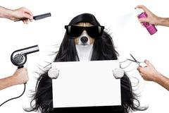 Verzorgende hond bij de kappers royalty-vrije stock afbeeldingen