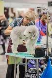Verzorgende honden bij de show Stock Fotografie