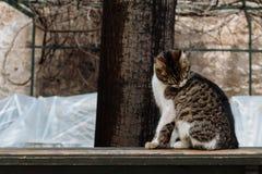 Verzorgende kat Royalty-vrije Stock Foto's