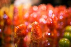 Verzuckerte Erdbeere auf einem Stock Stockfoto