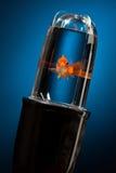 Verzweiflungs-Fische in einer wirklich schlechten Situation Stockbilder