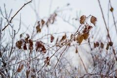 Verzweigen sich und die Blätter, die mit Frost bedeckt werden lizenzfreies stockbild
