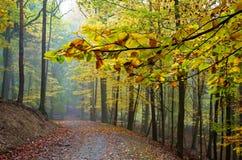 Verzweigen Sie sich über die Straße im Herbstwald Stockfotografie