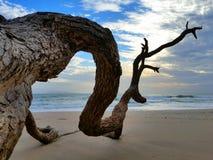 Verzweigen Sie sich auf den Strand Stockbild