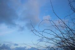 Verzweigen Sie sich auf Hintergrund des blauen Himmels Stockfoto