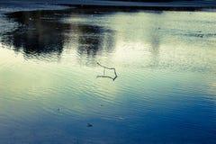 Verzweigen Sie sich in das Wasser Stockbild