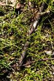 Verzweigen Sie sich in Gras stockbilder