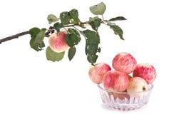 Verzweigen Sie sich mit Apfel und Vase Stockbilder