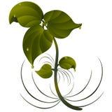 Verzweigen Sie sich mit Blättern Stockfoto