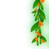 Verzweigen Sie sich mit Blättern und Blumen stockfotos