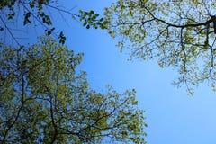 Verzweigen Sie sich mit blauem Himmel Stockbild
