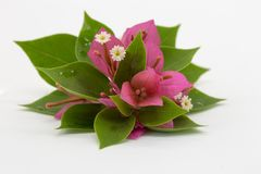 Verzweigen Sie sich mit den Blättern und Blumen, die auf weißem Hintergrund lokalisiert werden Blumenstrauß lokalisiert auf weiße Stockfotografie