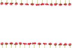 Verzweigen Sie sich mit den Blättern und roten Blumen, die auf weißem Hintergrund lokalisiert werden Blumenstrauß lokalisiert auf Lizenzfreies Stockfoto