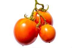 Verzweigen Sie sich mit drei reifen roten Tomaten Stockfoto