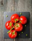 Verzweigen Sie sich mit fünf reifen roten Tomaten Wassertropfen auf reifen Früchten Grünblätter und -stamm Lizenzfreie Stockbilder