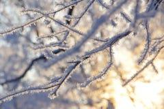 Verzweigen Sie sich mit Flocken des Schnees lizenzfreies stockfoto