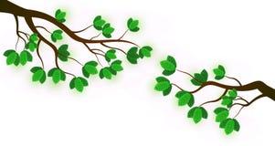 Verzweigen Sie sich mit frischen grünen Blättern stock abbildung