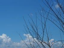 Verzweigen Sie sich mit Himmel stockfoto