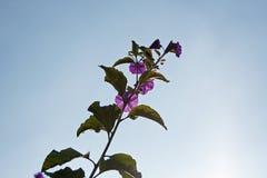 verzweigen Sie sich mit purpurroten Blumen lizenzfreies stockfoto