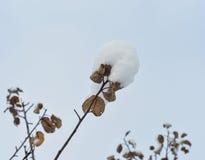 Verzweigen Sie sich mit Schnee gegen den blauen Himmel Stockfoto