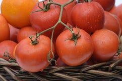 Verzweigen Sie sich mit Tomaten lizenzfreie stockfotografie