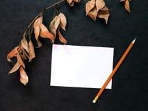 Verzweigen Sie sich mit trockenen Blättern lizenzfreies stockfoto
