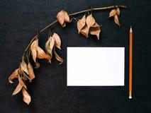 Verzweigen Sie sich mit trockenen Blättern Stockbild
